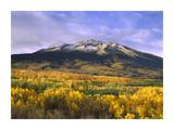 East Beckwith Mountain and trees in fall color, Gunnison National Forest, Colorado Posters by Tim Fitzharris