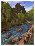 Mt. Spry with the Virgin River surrounded by Cottonwood trees, Zion National Park, Utah Posters by Tim Fitzharris