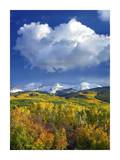 East Beckwith Mountain flanked by fall colored Aspen forests under cumulus clouds, Colorado Posters by Tim Fitzharris