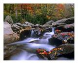 Little Pigeon River with Colorful Maple leaves, Great Smoky Mountains National Park, Tennessee Prints by Tim Fitzharris