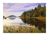 Eagle Lake, Mount Desert Island, Acadia National Park, Maine Posters by Tim Fitzharris