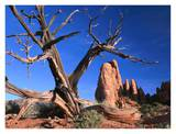 Snag at Fiery Furnace labyrinth, Arches National Park, Utah Art by Tim Fitzharris