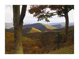Autumn forest at Brown Mountain, Shenandoah National Park, Virginia Posters by Tim Fitzharris