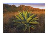 Agave plants and Chisos Mountains, Big Bend National Park, Chihuahuan Desert, Texas Prints by Tim Fitzharris