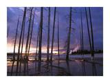 Dead trees in Lower Geyser Basin at sunset, Yellowstone NP, Wyoming Prints by Tim Fitzharris