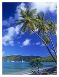 Palm trees at Maho Bay, Virgin Islands Print by Tim Fitzharris