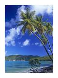 Palm trees at Maho Bay, Virgin Islands Prints by Tim Fitzharris