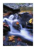 Autumn leaves in Little River, Great Smoky Mountains NP Tennessee Prints by Tim Fitzharris