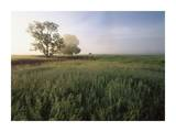 Oak trees shrouded in fog, Flint Hills, Kansas Prints by Tim Fitzharris
