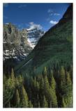 Rocky Mountains covered in coniferous forests, Glacier NP, Montana Prints by Tim Fitzharris