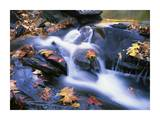 Autumn leaves in Little River, Great Smoky Mountains NP, Tennessee Prints by Tim Fitzharris