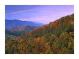Appalachian Mountains ablaze with fall color, Great Smoky Mountains National Park, North Carolina Posters by Tim Fitzharris