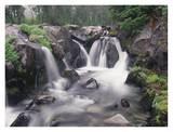 Paradise River cascade, Mt Rainier National Park, Washington Posters by Tim Fitzharris