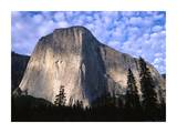 El Capitan rising over the forest, Yosemite National Park, California Art by Tim Fitzharris