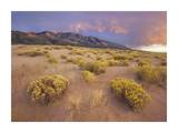 Sagewort on sand dune, Sangre de Cristo Mountains, Great Sand Dunes National Monument, Colorado Print by Tim Fitzharris