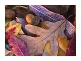 Acorns, Oak, Cherry and Sumac, fall, Petit Jean State Park, Arkansas Posters af Tim Fitzharris