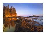 Tide Pools, Botanical Beach, Juan de Fuca Provincial Park, Vancouver Island, BC, Canada Prints by Tim Fitzharris