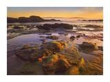 Tide Pools, Botanical Beach, Juan de Fuca Provincial Park, Vancouver Island, BC, Canada Posters by Tim Fitzharris