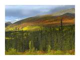 Boreal forest beneath Goldensides Mountain, Tombstone Territorial Park, Yukon Territory, Canada Print by Tim Fitzharris