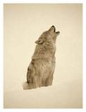 Timber Wolf portrait, howling in snow, North America - Sepia Print by Tim Fitzharris