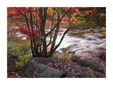 The Swift River, White Mountains National Forest, New Hampshire Prints by Tim Fitzharris