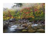 Swift River flowing through fall colored forest, White Mountains National Forest, New Hampshire Art by Tim Fitzharris
