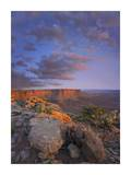 View from the Green River Overlook, Canyonlands National Park, Utah Prints by Tim Fitzharris