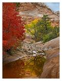 Maple and Cottonwood autumn foliage, Zion National Park, Utah Posters by Tim Fitzharris
