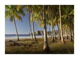 Palms at Playa Carrillo, Guanacaste, Costa Rica Prints by Tim Fitzharris