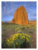 Common Sunflowers and Temple of the Sun, Capitol Reef NP, Utah Prints by Tim Fitzharris