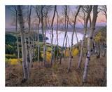 Aspen forest overlooking Fremont Lake, Bridger-Teton National Forest, Wyoming Art by Tim Fitzharris