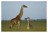 Giraffe adult and foal on savanna, Kenya Print by Tim Fitzharris