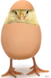 Hatching Chick Lifesize Standup Cardboard Cutouts