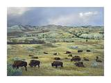 American Bison herd grazing on praire, Theodore Roosevelt NP, North Dakota Kunst af Tim Fitzharris