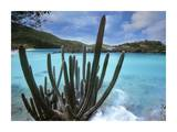 Cactus growing along Trunk Bay, Virgin Islands Art by Tim Fitzharris