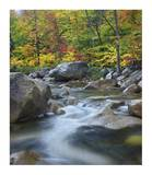 Swift River in fall, White Mountains National Forest, New Hampshire Posters by Tim Fitzharris