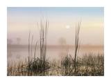 Reeds in Sweet Bay Pond, Everglades National Park, Florida Posters by Tim Fitzharris