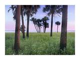 Cabbage Palm meadow, Myakka River State Park, Florida Posters by Tim Fitzharris
