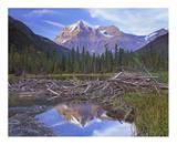 Beaver dam and Mount Robson, Mount Robson Provincial Park, BC, Canada Art by Tim Fitzharris
