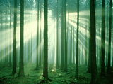 Sunbeams through Forest Trees, Morning Photographic Print by Gerolf Kalt