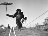 Chimp Balancing on Line with Umbrella and Puppy Photographic Print