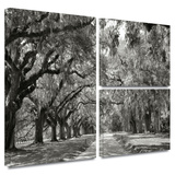 Live Oak Avenue Gallery-Wrapped Canvas Stretched Canvas Print by Steve Ainsworth