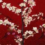 Prunus, Cherry Tree Photographic Print by Johnny Greig