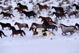 Horses Running through Snow Photographic Print by David Stoecklein
