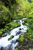 Wahkeena Creek in Columbia River Gorge Photographic Print by Craig Tuttle