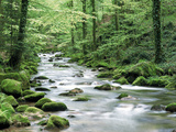 Forest Creek with Deciduous Forest in the Black Forest, Germany Photographic Print by Fridmar Damm