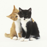 Black and Ginger Kittens Hugging Photographic Print by Pat Doyle
