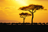 Silhouette of Wildebeest Herd Photographic Print by John Conrad