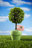 Miniature Tree in Pot Photographic Print by Lew Robertson
