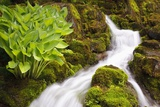 Waterfall in Crystal Spring Rhododendron Gardens Photographic Print by Craig Tuttle